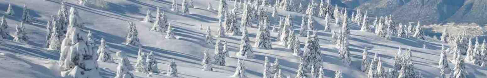 Winter Trees Landscape Small Coquihalla Summit Snowmobile Club